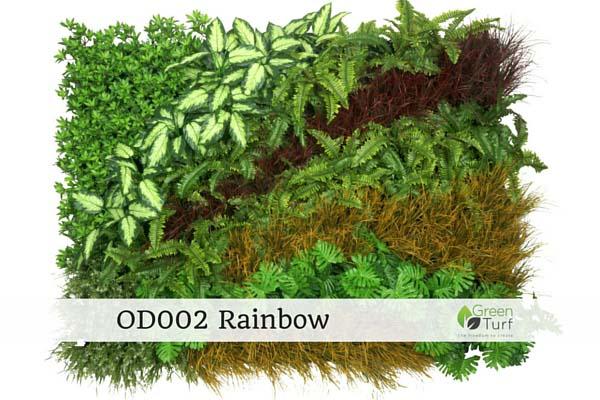OD002 Rainbow