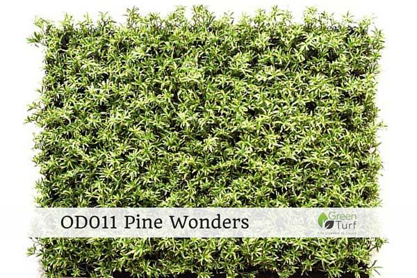 OD011 Pine Wonders