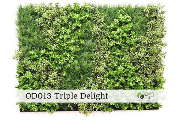 OD013 Triple Delight