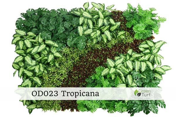 OD023 Tropicana