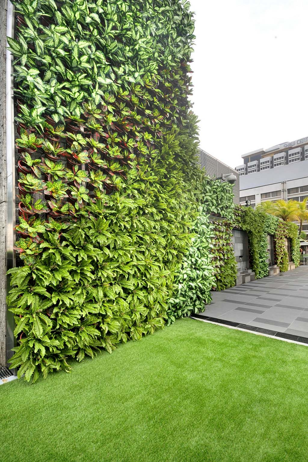 Home greenturf asia for Wall plants outdoor