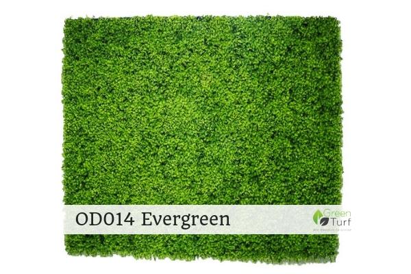 OD014 Evergreen
