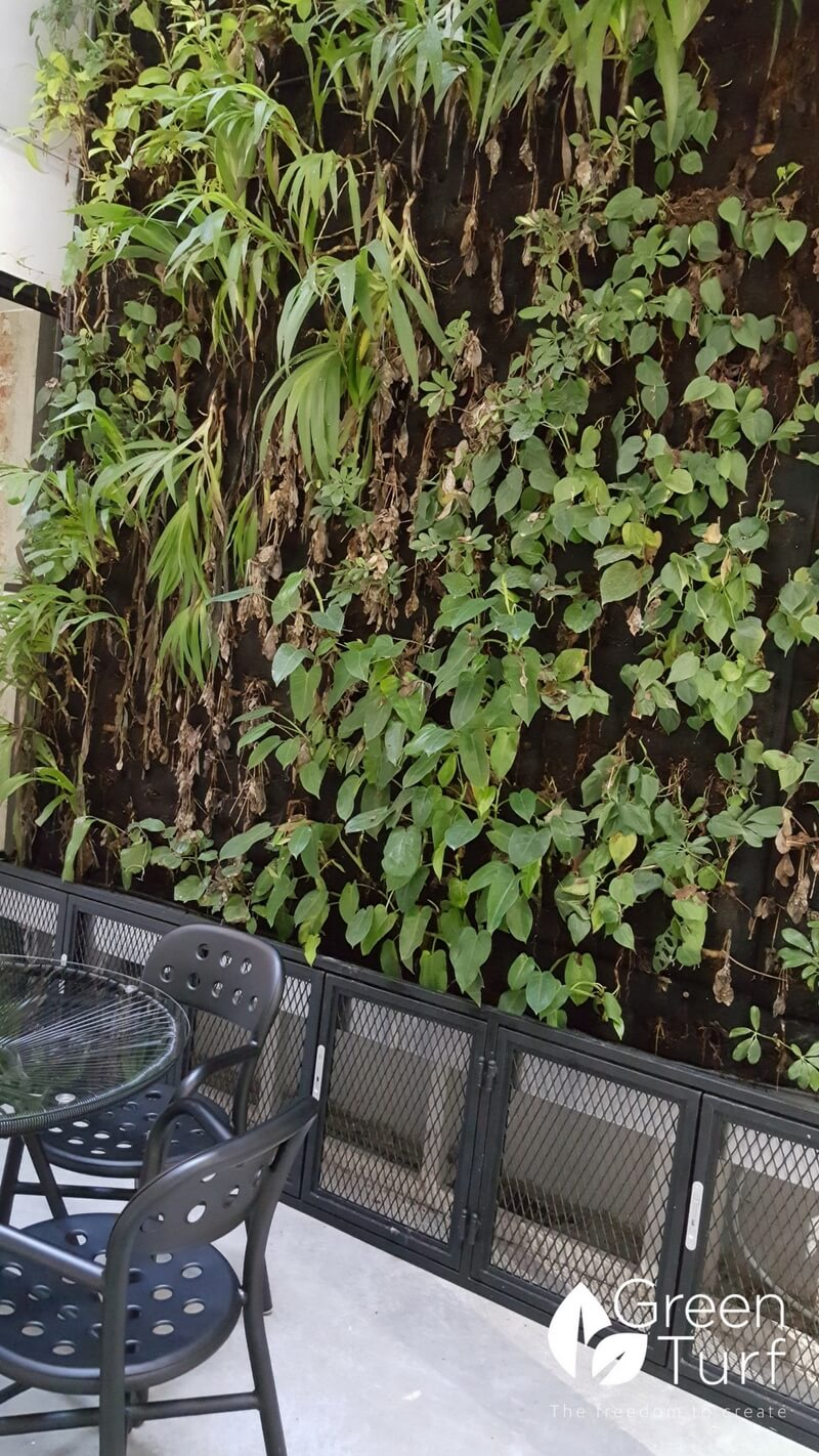 """Live"" Green Wall with Some Overgrown and Some Rotting Plants"