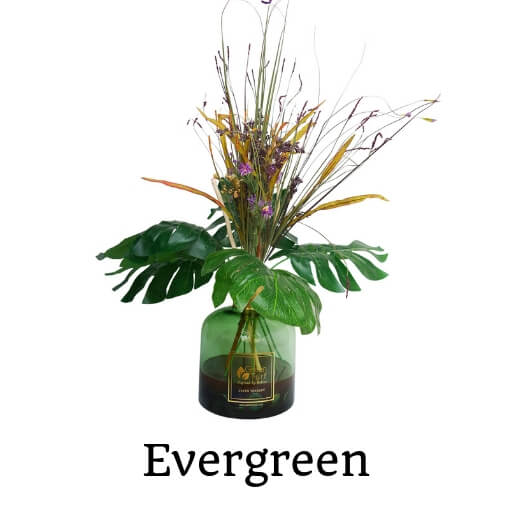 Green Therapy Evergreen Plant Arrangement